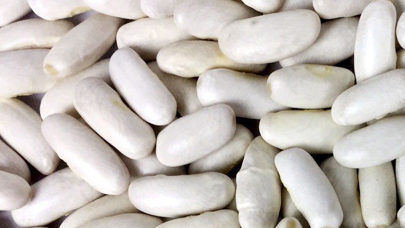 Close up photo of faba beans
