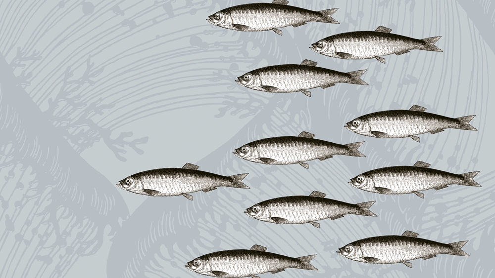 Pescao Cushions